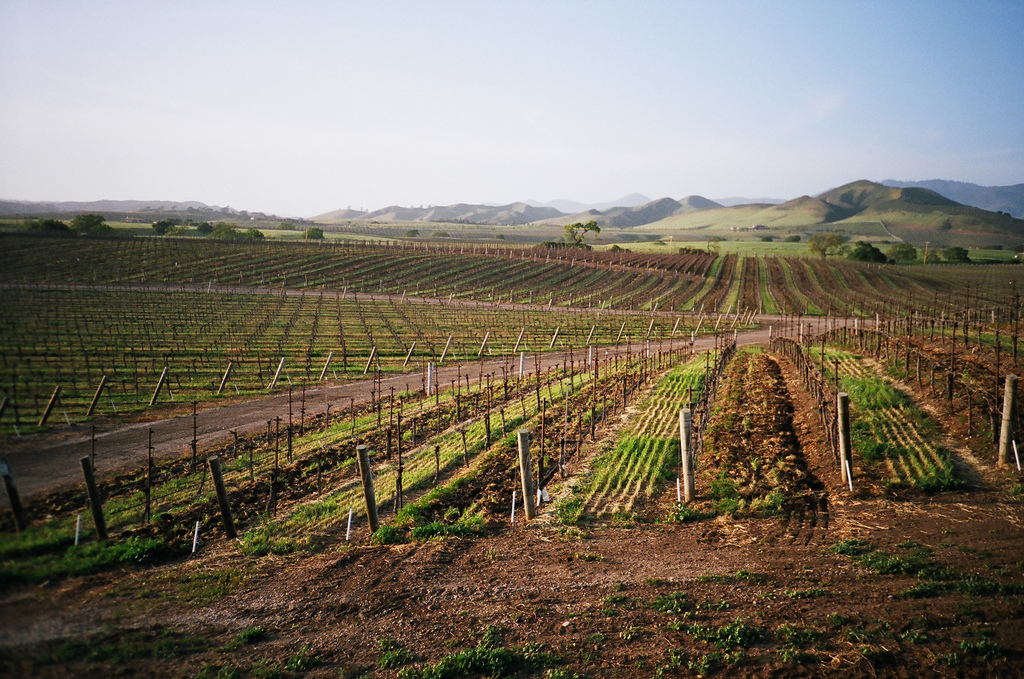 California wine-growing region